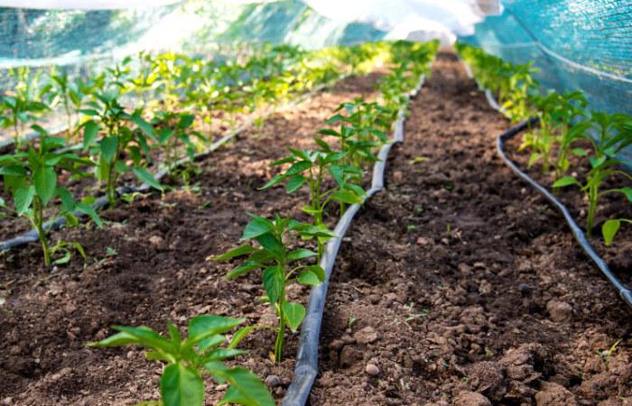 Bewässerung Gemüsebeete, Gartenoase Beregnungen Erlangen